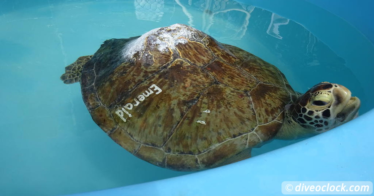 Explore the Whale Museum of the Dominican Republic  Blog Turtle Hospital