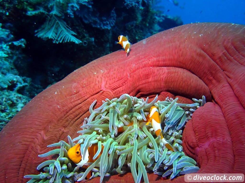 Raja Ampat - World Class Diving in Papua (Indonesia) - Dive o\'clock!