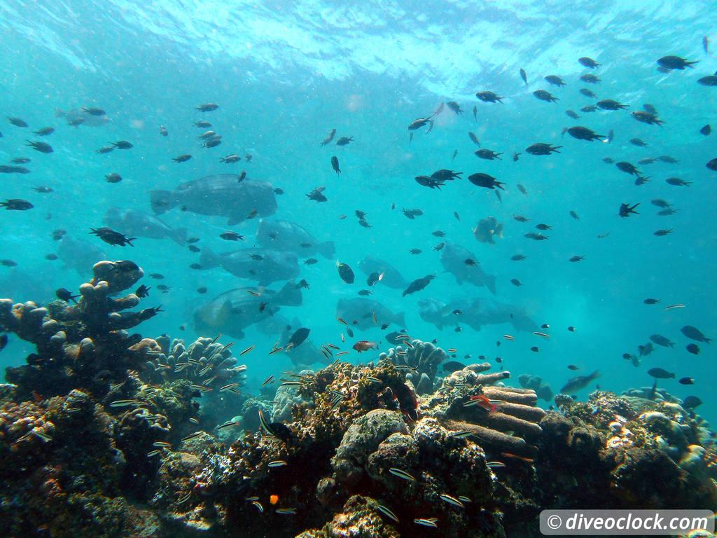 Sipadan world class scuba diving in malaysian borneo dive o 39 clock - Sipadan dive centre ...