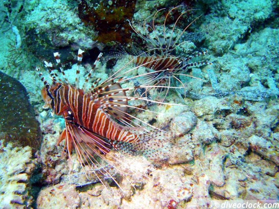 Splendid House Reef And The Sardine Run Of Moalboal The