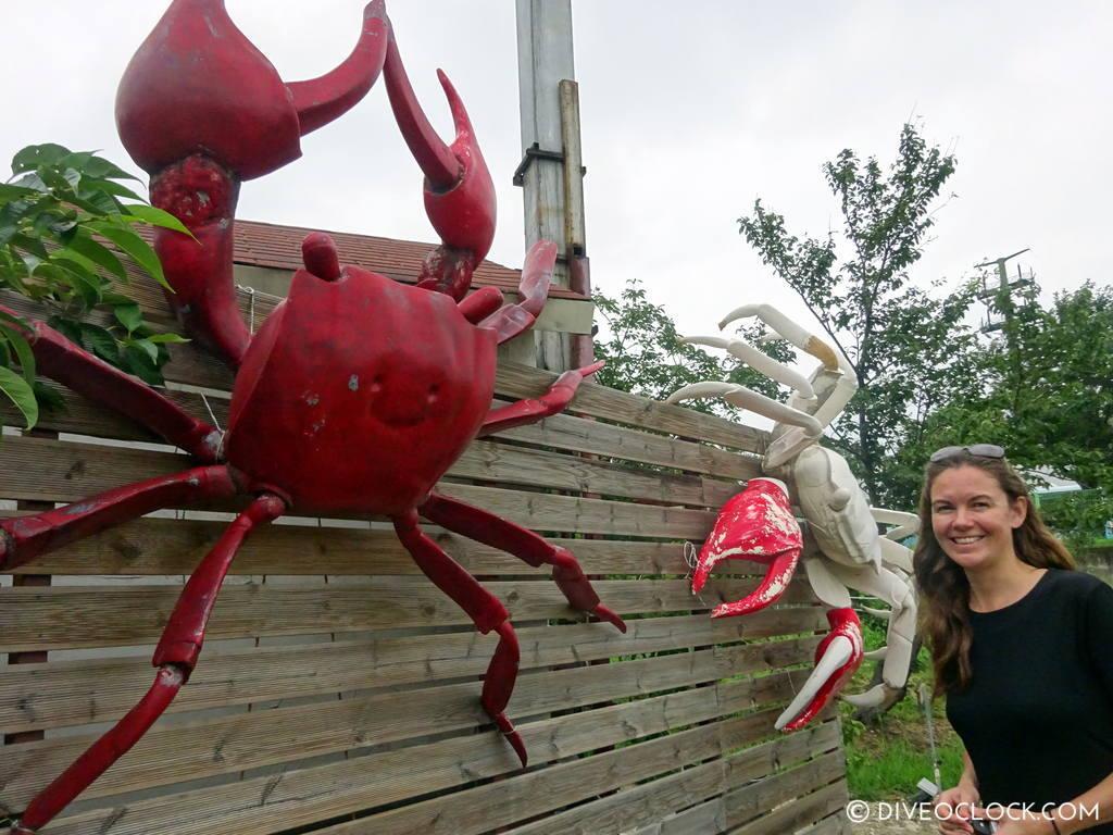 Terra Crab Farm In Sokcho Gotta Love The Smiling Crabs Dive O