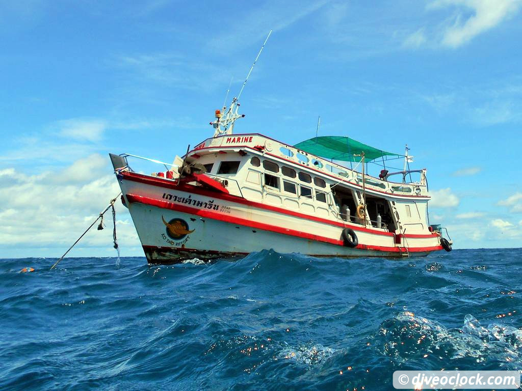 Koh tao how to organize diving at this hot spot in thailand tips from a pro dive o 39 clock - Ko tao dive resort ...
