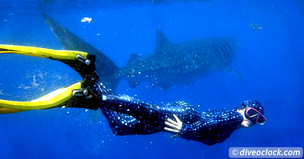 How Far Would You Go to See a Whale Shark?  Caribbean Mexico WhaleSharks