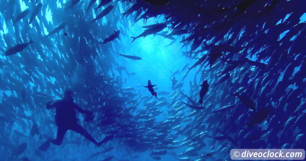 5 Funny Confessions of a Dive Instructor   Latin America Mexico Cabo Pulmo