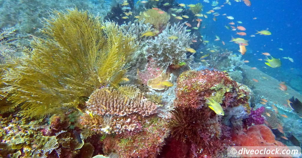 Reef Safe Sunscreen Explained  Quiz 13 Coral Triangle